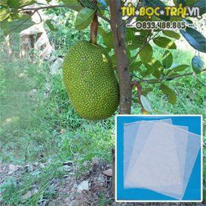 Túi bọc trái cây kích thước 50×70