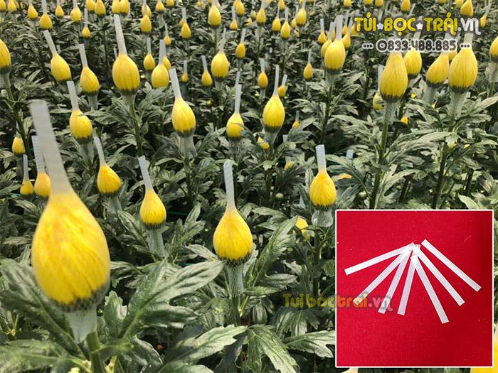 Lưới bao hoa cúc dài 13 cm màu trắng