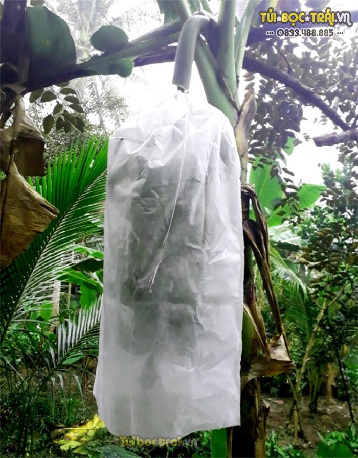 Túi bọc buồng chuối chất liệu vải không dệt
