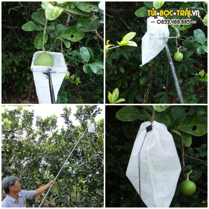 Dụng cụ bao trái cây trên cao tiện dụng