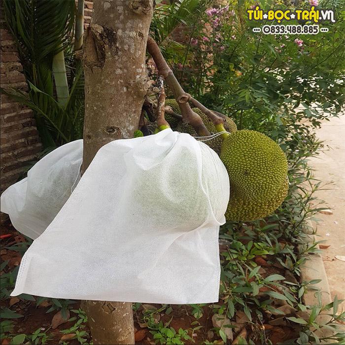 Túi vải bọc mít không ảnh hưởng đến quá trình quang hợp của trái